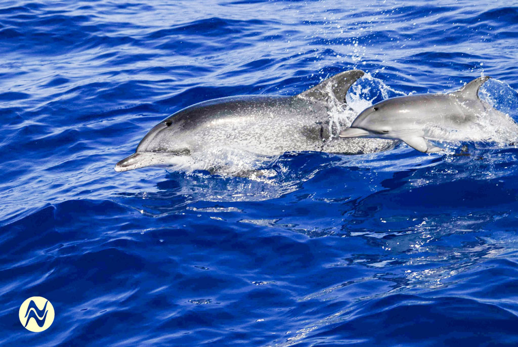 Dolphins15