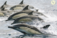 Dolphins13