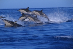 Dolphins6