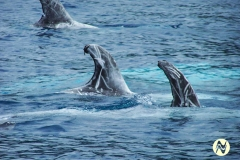 Dolphins8